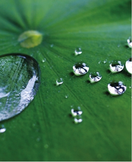 防汚効果のある撥水性